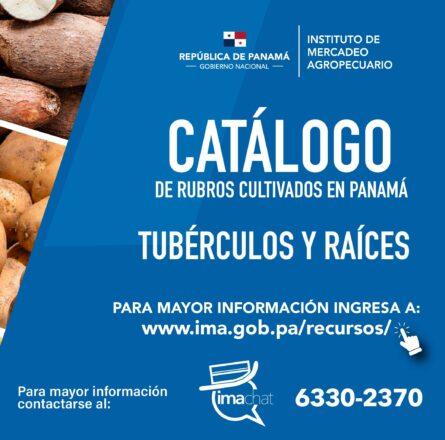PLANTILLA - TUBERCULOS- WEB (2)